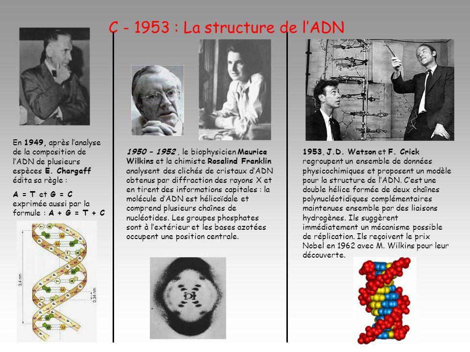 C - 1953 : La structure de l'ADN