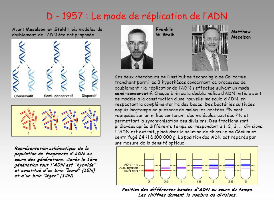 D - 1957 : Le mode de réplication de l'ADN