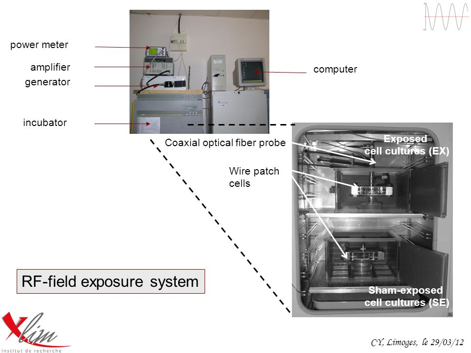 RF-field exposure system