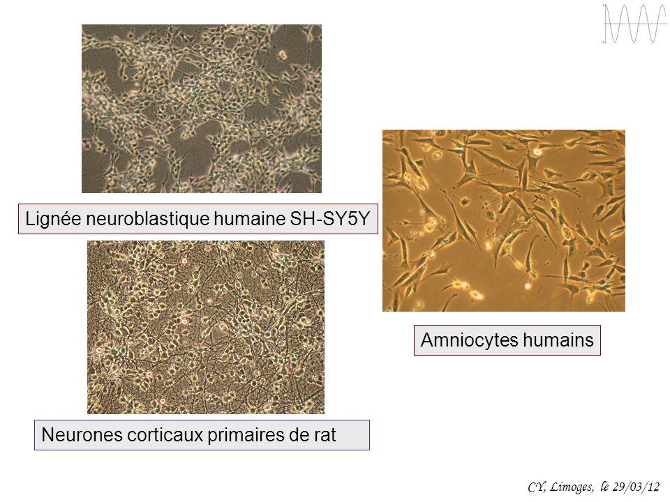 Lignée neuroblastique humaine SH-SY5Y