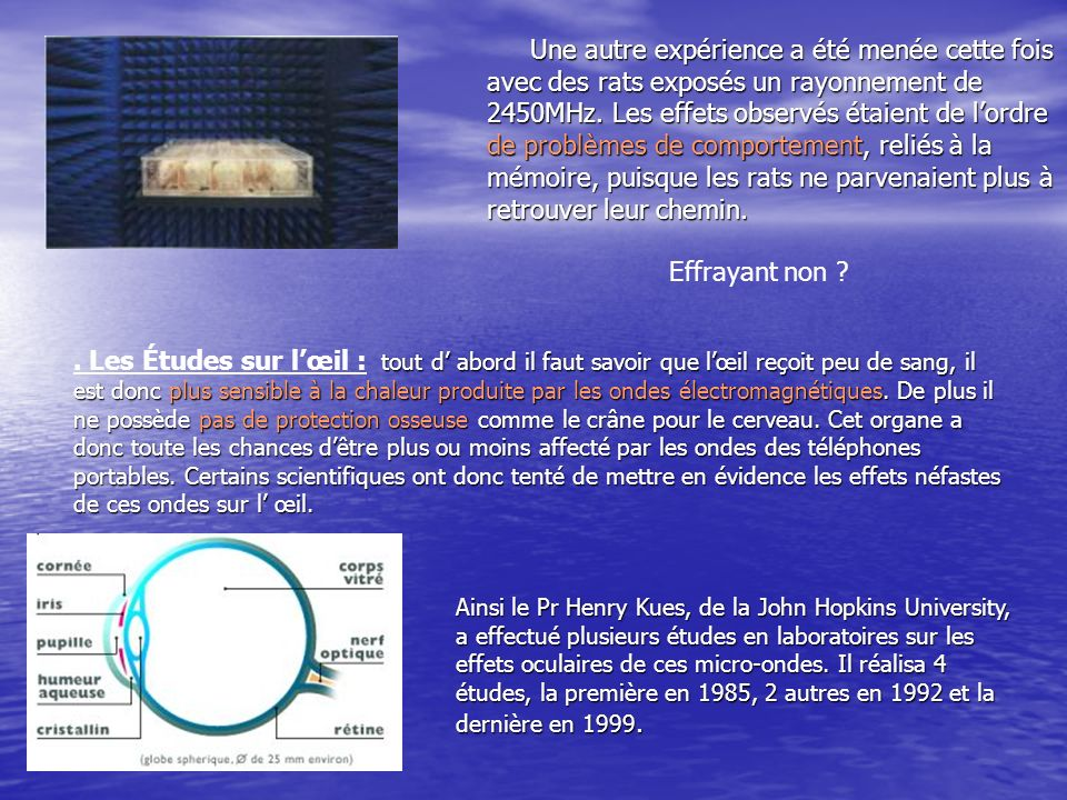 Une autre expérience a été menée cette fois avec des rats exposés un rayonnement de 2450MHz. Les effets observés étaient de l'ordre de problèmes de comportement, reliés à la mémoire, puisque les rats ne parvenaient plus à retrouver leur chemin.