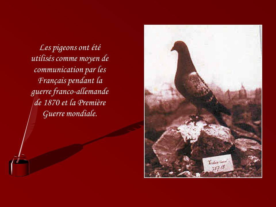 Les pigeons ont été utilisés comme moyen de communication par les Français pendant la guerre franco-allemande de 1870 et la Première Guerre mondiale.
