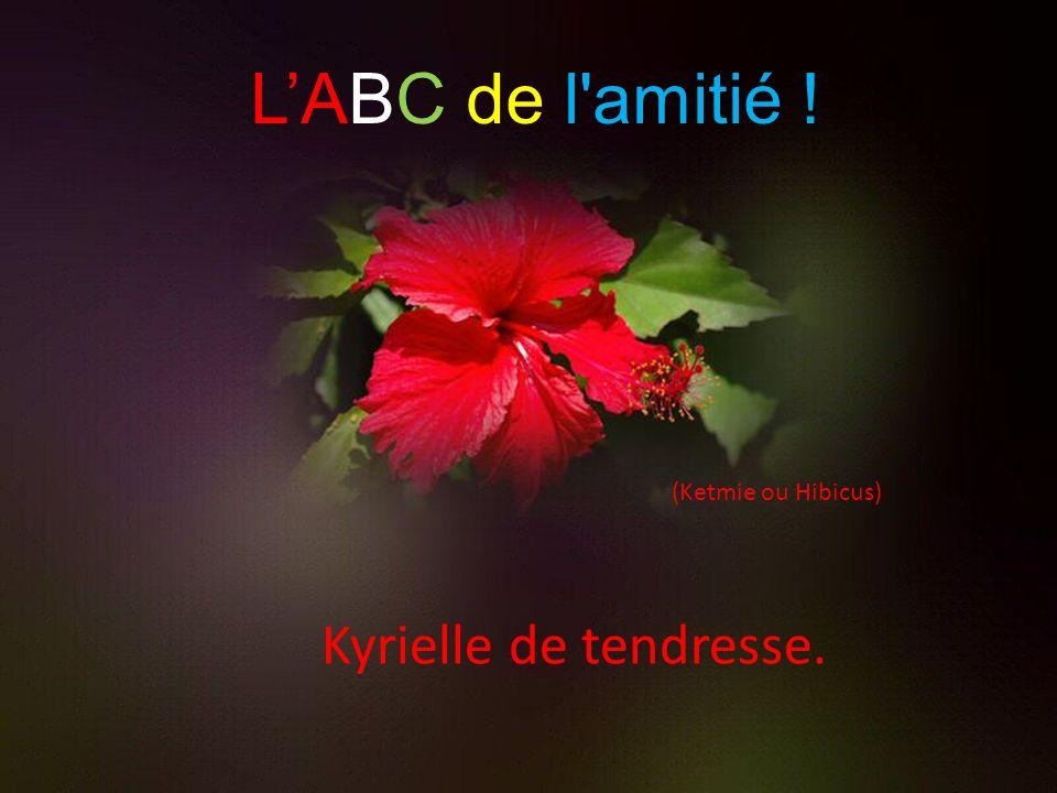 L'ABC de l amitié ! (Ketmie ou Hibicus) Kyrielle de tendresse.