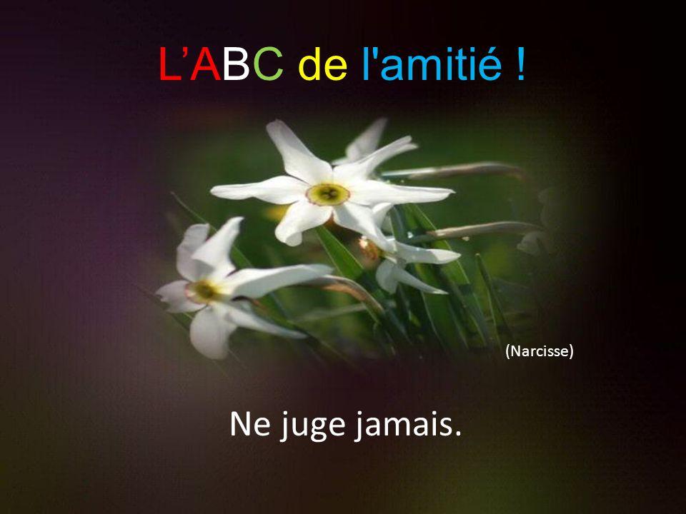 L'ABC de l amitié ! (Narcisse) Ne juge jamais.