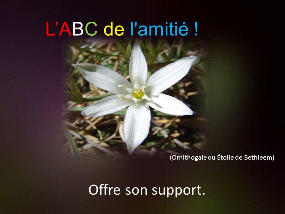 L'ABC de l amitié ! Offre son support.