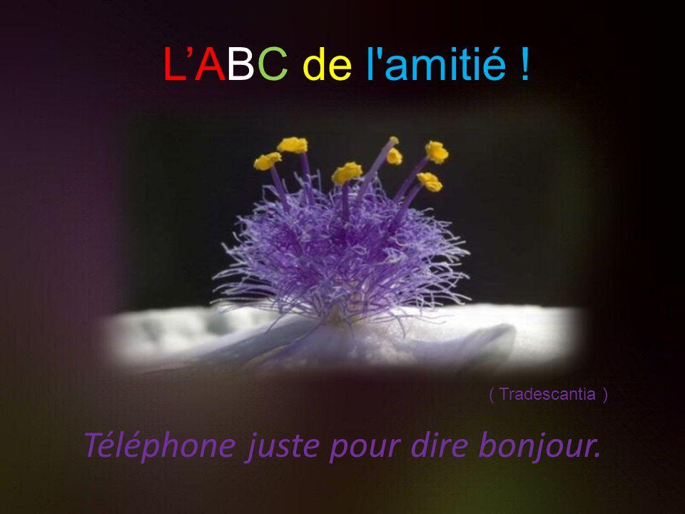 Téléphone juste pour dire bonjour.