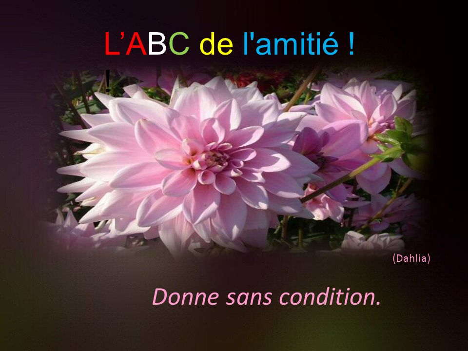 L'ABC de l amitié ! ! (Dahlia) Donne sans condition.
