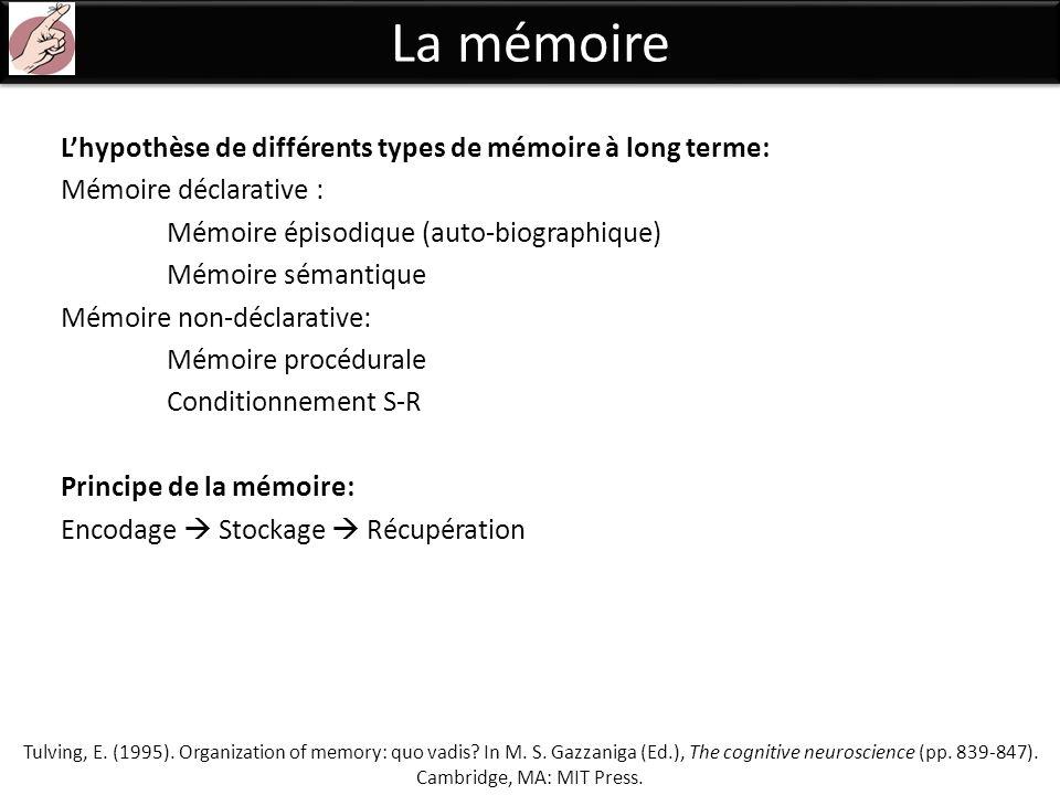 La mémoire L'hypothèse de différents types de mémoire à long terme: