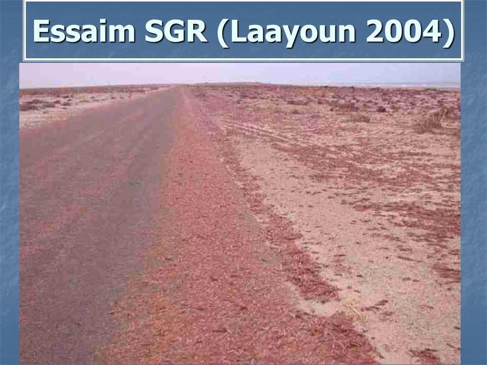 Essaim SGR (Laayoun 2004)