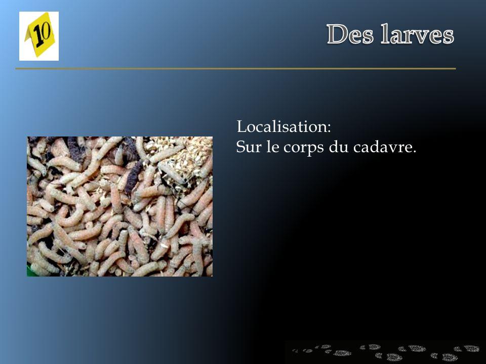 Des larves Localisation: Sur le corps du cadavre.