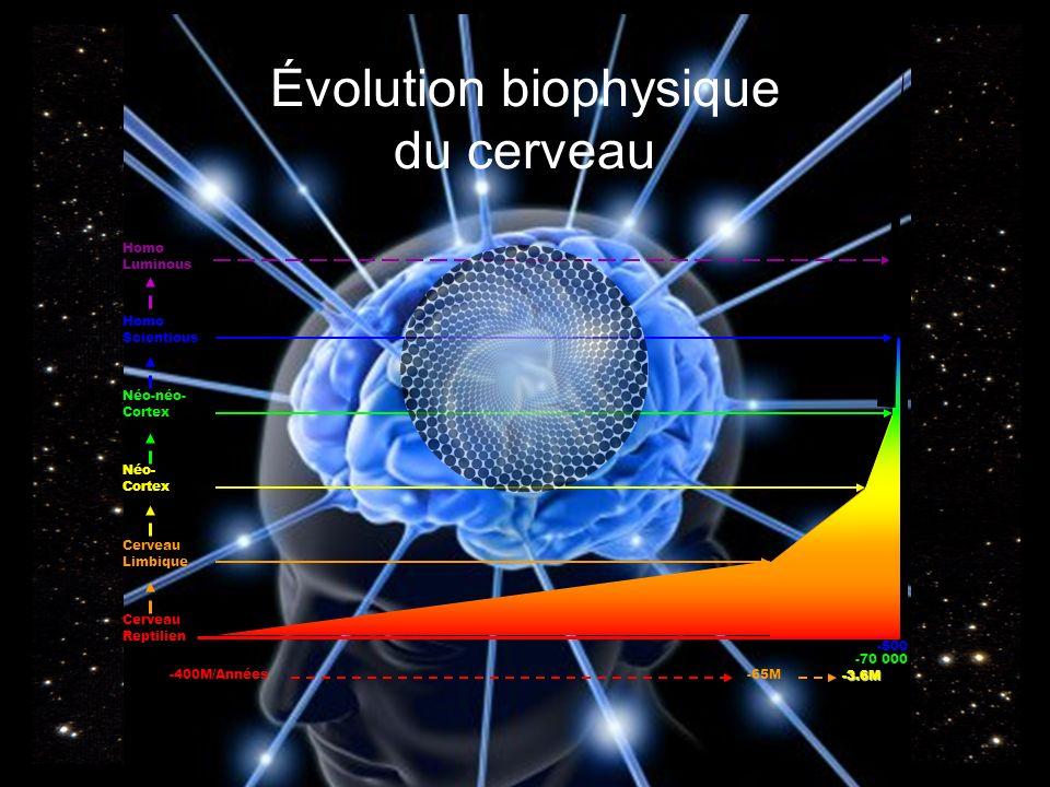 Évolution biophysique du cerveau