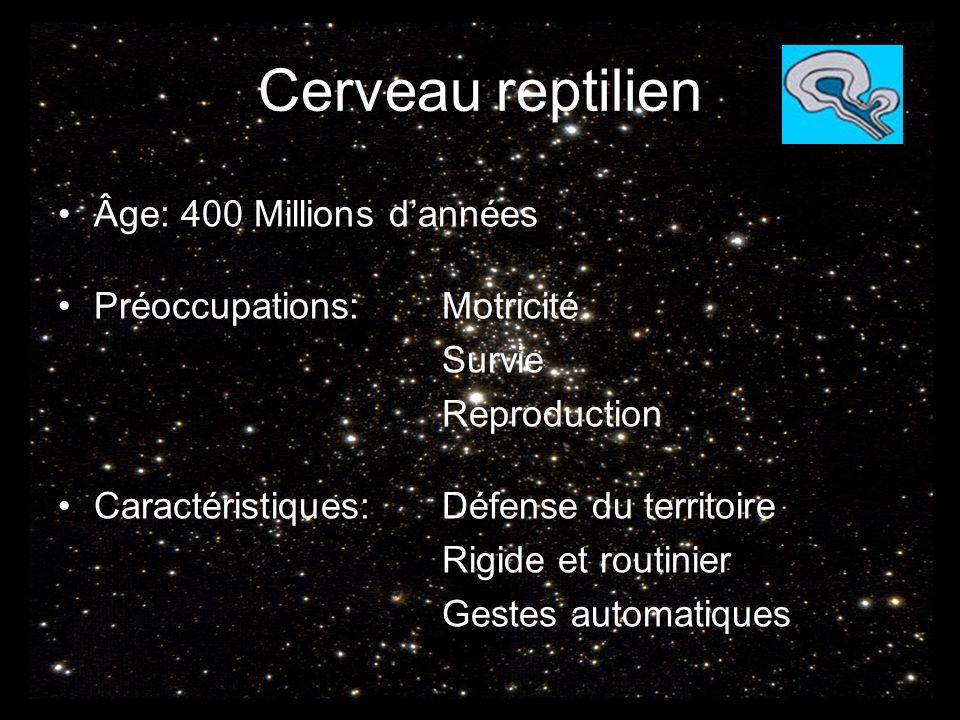 Cerveau reptilien Âge: 400 Millions d'années Préoccupations: Motricité