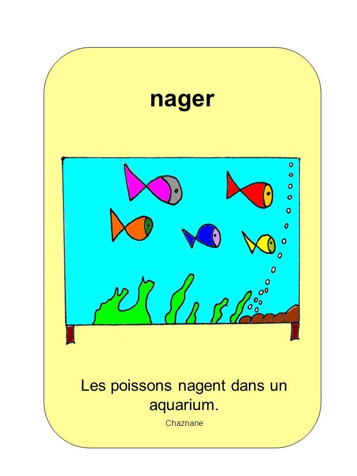 Les poissons nagent dans un aquarium.