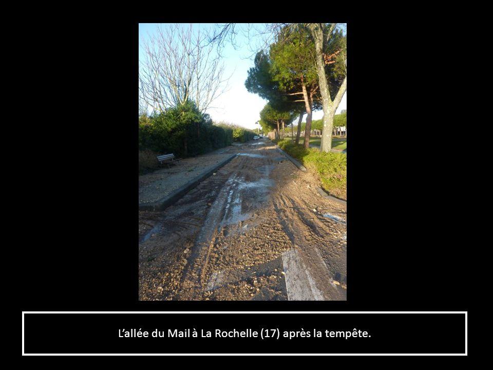L'allée du Mail à La Rochelle (17) après la tempête.