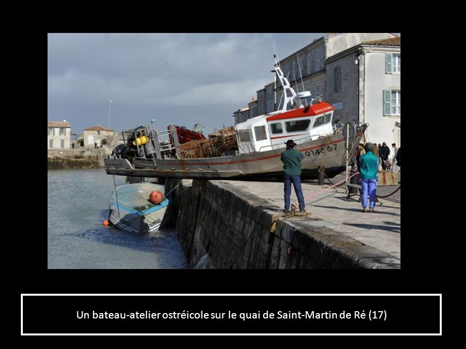 Un bateau-atelier ostréicole sur le quai de Saint-Martin de Ré (17)