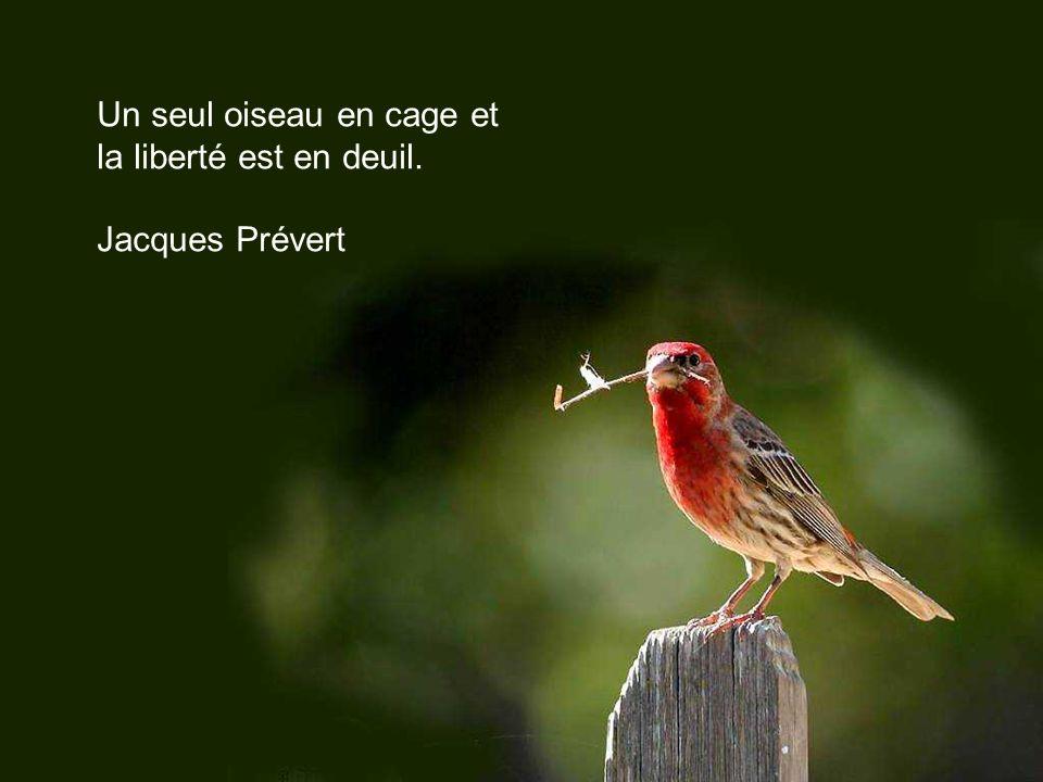 Un seul oiseau en cage et la liberté est en deuil.