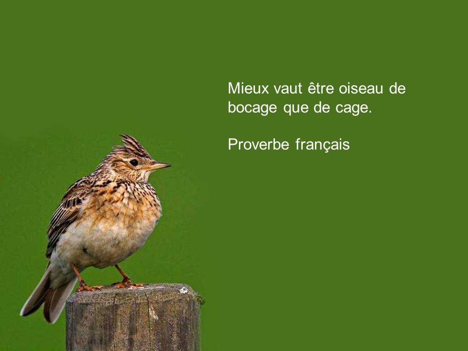 Mieux vaut être oiseau de bocage que de cage.