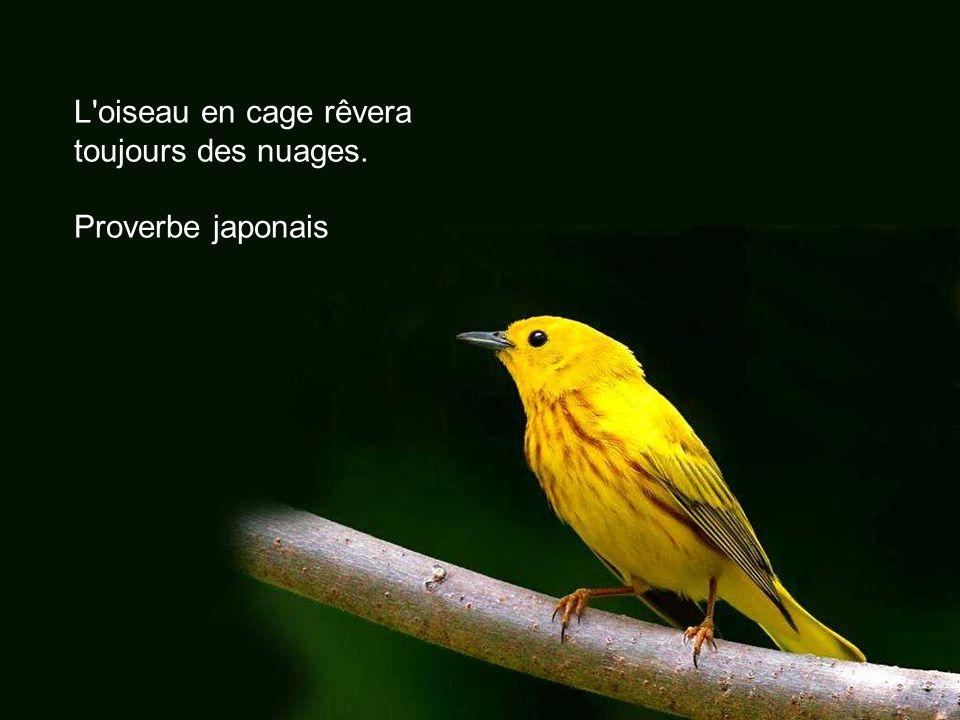 L oiseau en cage rêvera toujours des nuages.