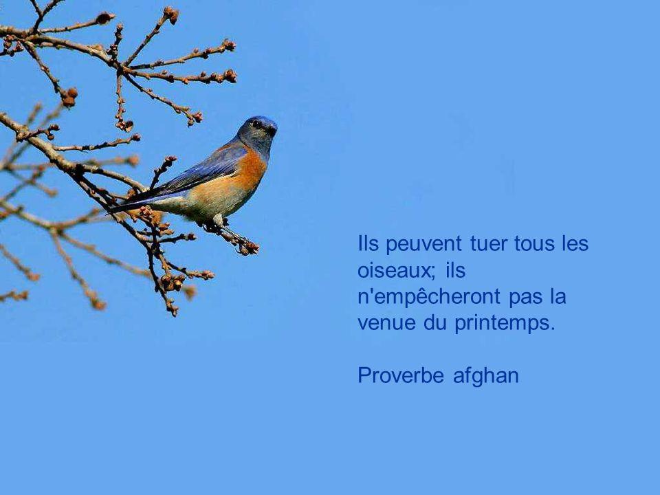 Ils peuvent tuer tous les oiseaux; ils n empêcheront pas la venue du printemps.