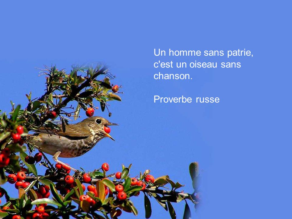 Un homme sans patrie, c est un oiseau sans chanson.