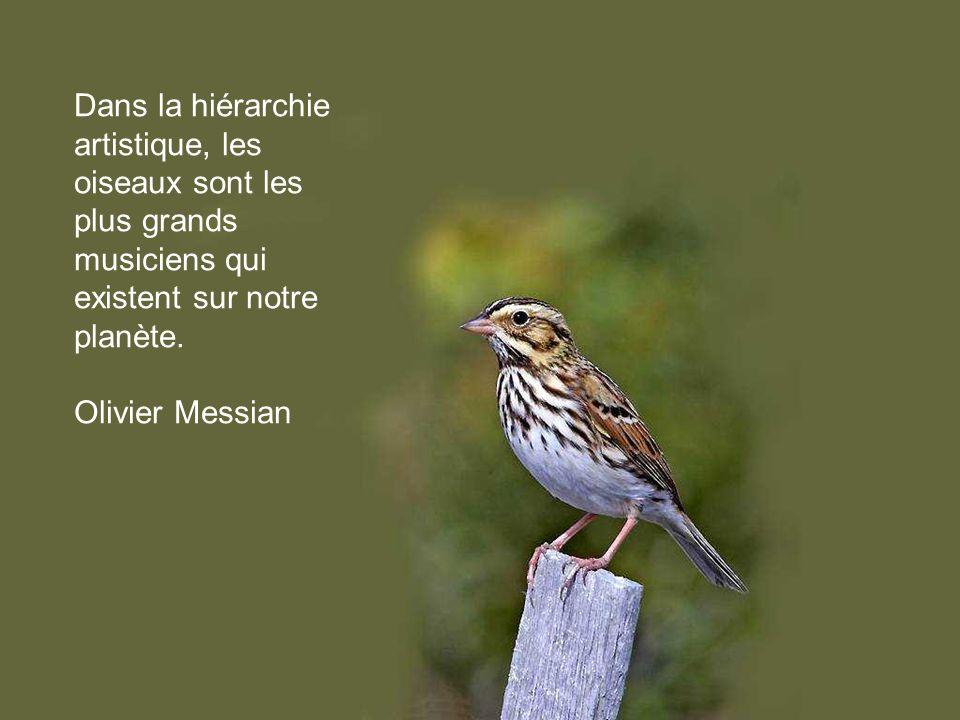 Dans la hiérarchie artistique, les oiseaux sont les plus grands musiciens qui existent sur notre planète.