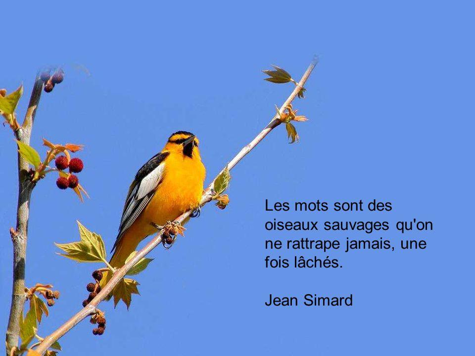 Les mots sont des oiseaux sauvages qu on ne rattrape jamais, une fois lâchés.