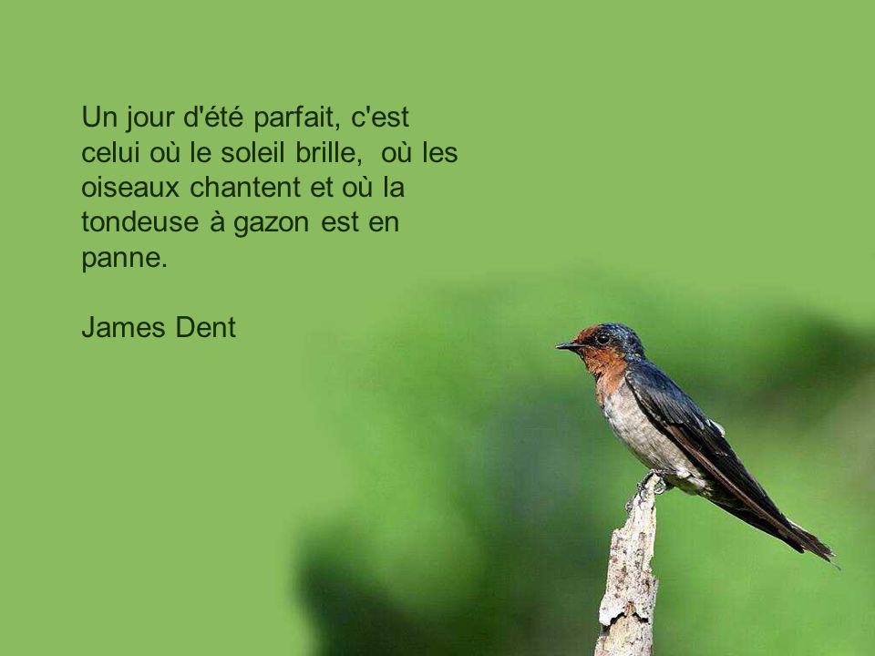 Un jour d été parfait, c est celui où le soleil brille, où les oiseaux chantent et où la tondeuse à gazon est en panne.