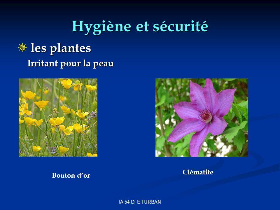 Hygiène et sécurité les plantes Irritant pour la peau Clématite