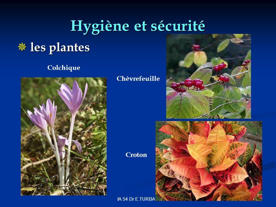 Hygiène et sécurité les plantes Colchique Chèvrefeuille Croton