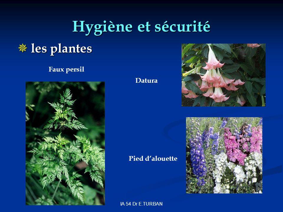 Hygiène et sécurité les plantes Faux persil Datura Pied d'alouette
