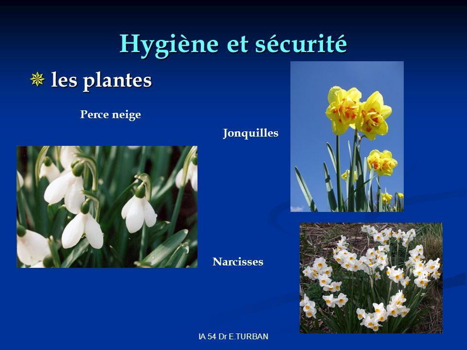 Hygiène et sécurité les plantes Perce neige Jonquilles Narcisses