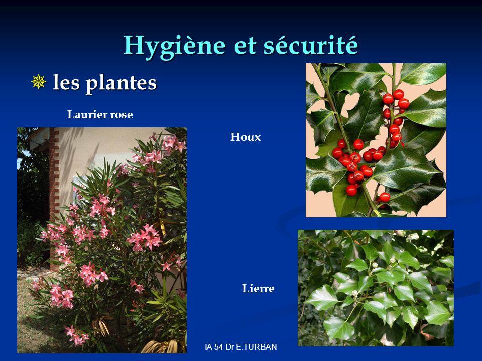 Hygiène et sécurité les plantes Laurier rose Houx Lierre
