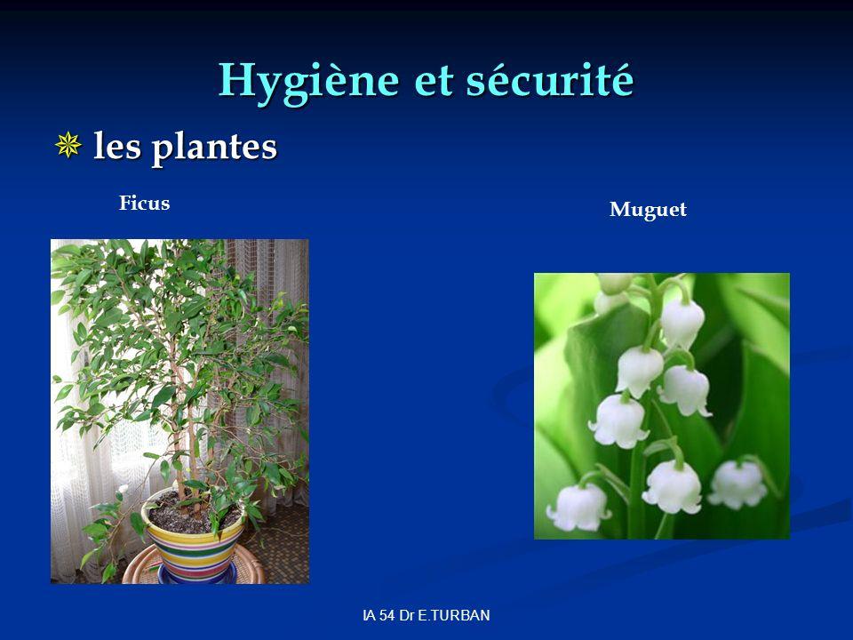 Hygiène et sécurité les plantes Ficus Muguet IA 54 Dr E.TURBAN