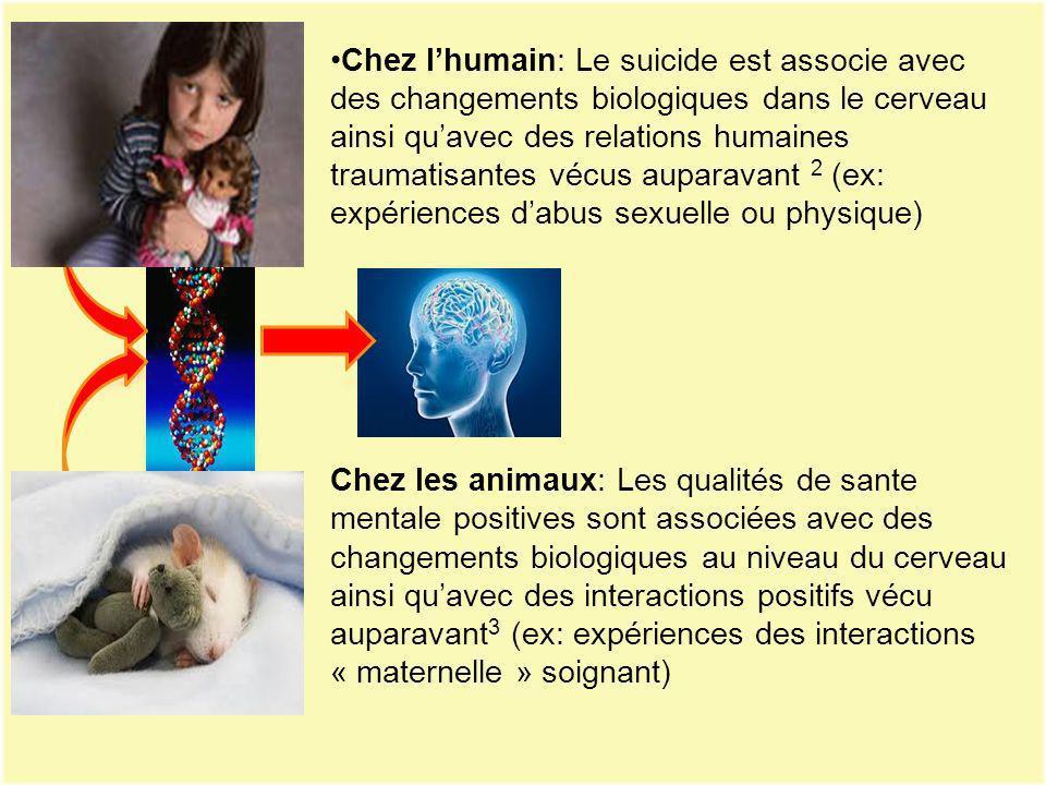 Chez l'humain: Le suicide est associe avec des changements biologiques dans le cerveau ainsi qu'avec des relations humaines traumatisantes vécus auparavant 2 (ex: expériences d'abus sexuelle ou physique)