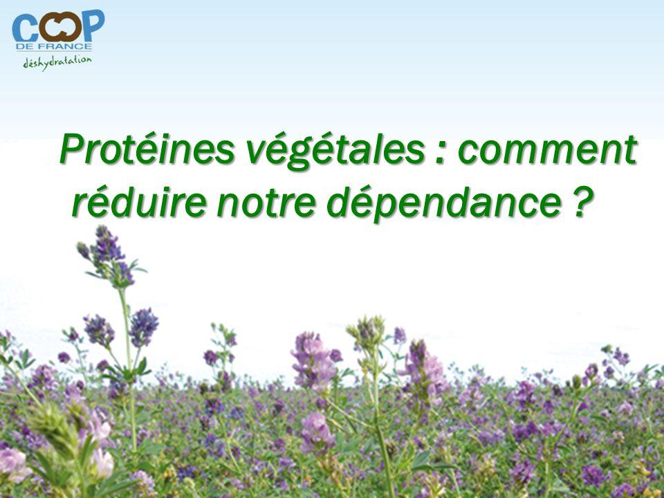 Protéines végétales : comment réduire notre dépendance