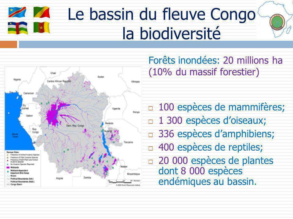 Le bassin du fleuve Congo et la biodiversité