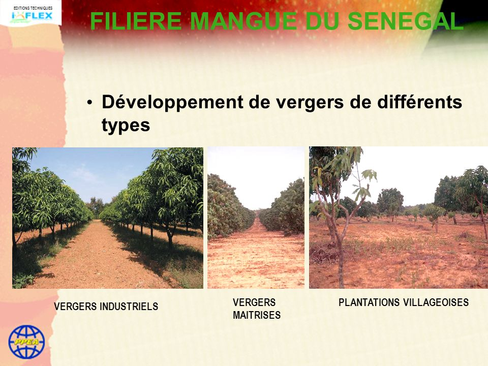 FILIERE MANGUE DU SENEGAL