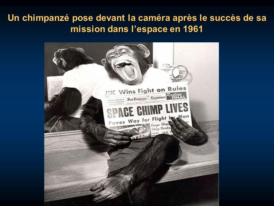 Un chimpanzé pose devant la caméra après le succès de sa mission dans l'espace en 1961