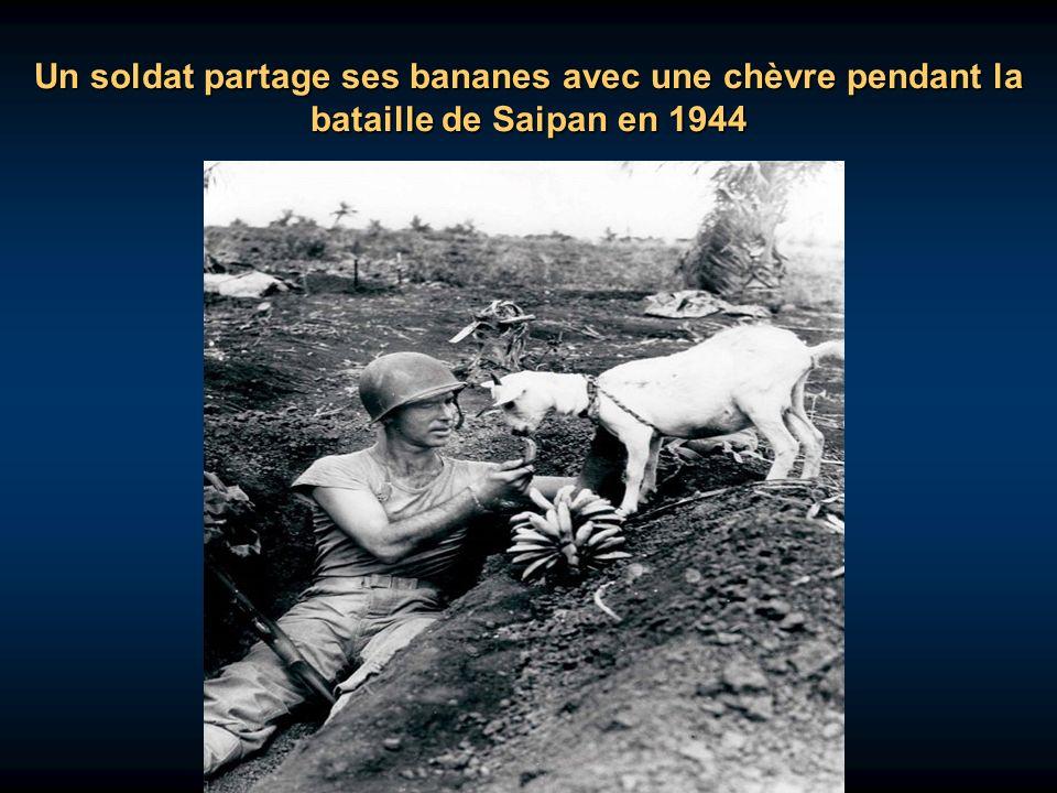 Un soldat partage ses bananes avec une chèvre pendant la bataille de Saipan en 1944