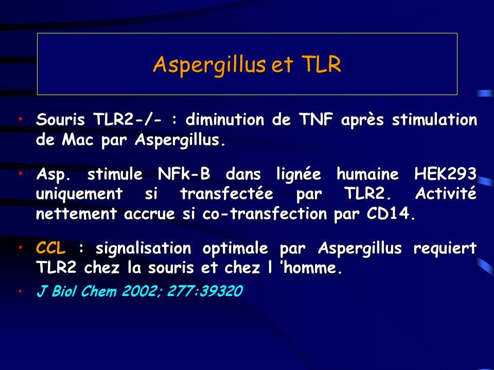 Aspergillus et TLR Souris TLR2-/- : diminution de TNF après stimulation de Mac par Aspergillus.