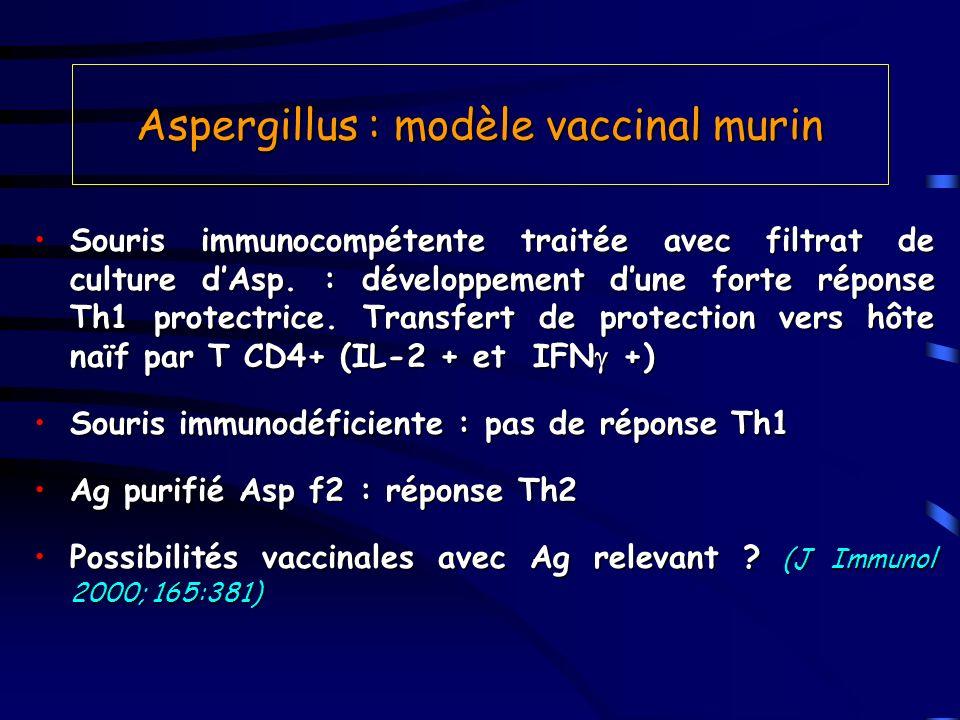Aspergillus : modèle vaccinal murin