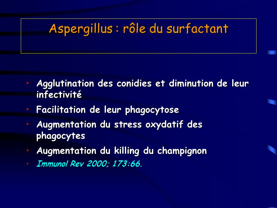 Aspergillus : rôle du surfactant