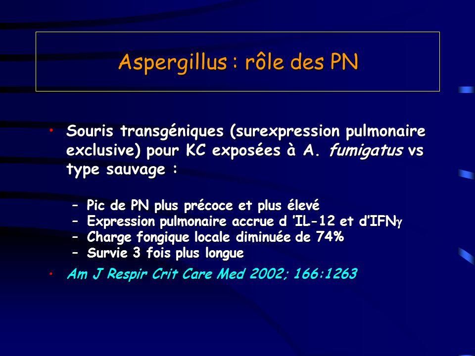 Aspergillus : rôle des PN