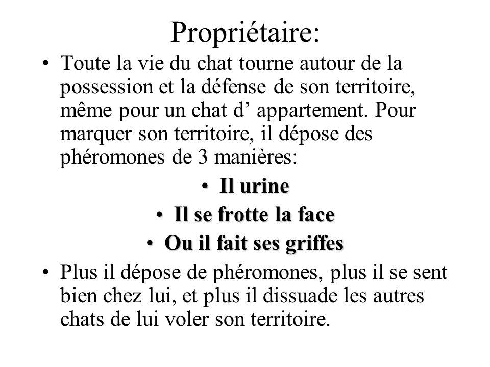 Propriétaire: