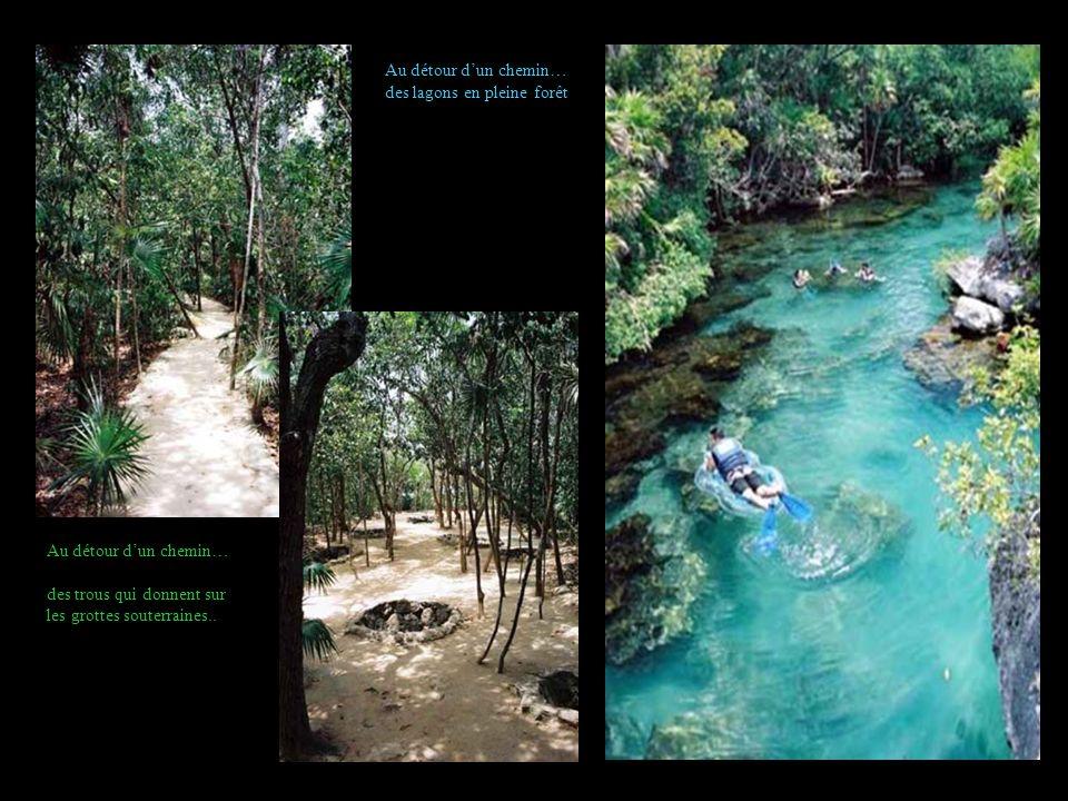 Au détour d'un chemin… des lagons en pleine forêt. Au détour d'un chemin… des trous qui donnent sur.