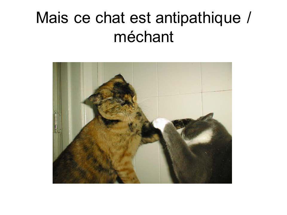 Mais ce chat est antipathique / méchant