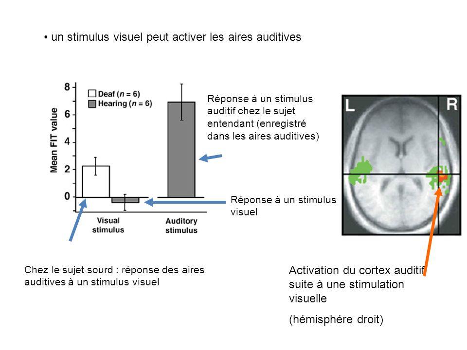 un stimulus visuel peut activer les aires auditives