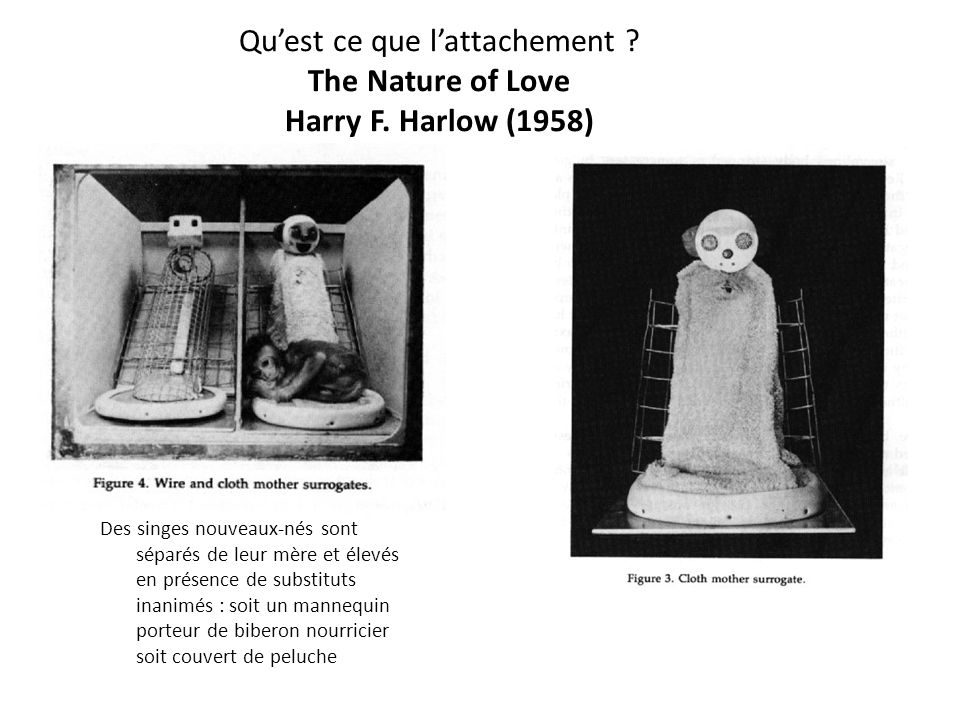 Qu'est ce que l'attachement The Nature of Love Harry F. Harlow (1958)