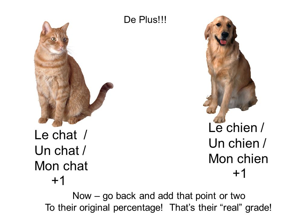 Le chien / Le chat / Un chien / Un chat / Mon chien Mon chat +1 +1