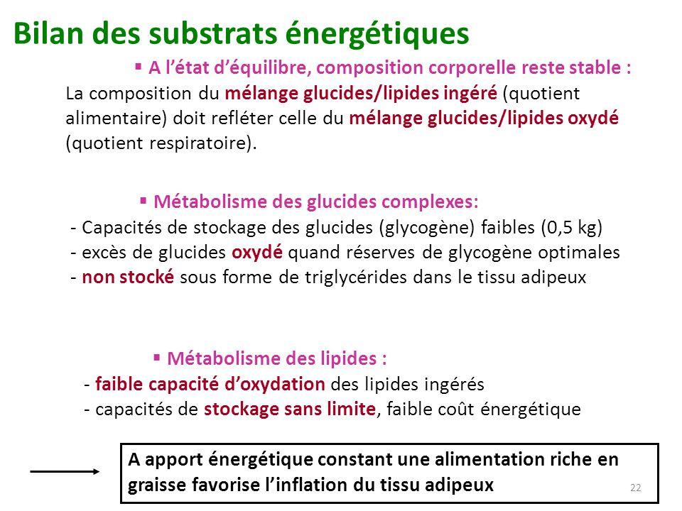 Bilan des substrats énergétiques